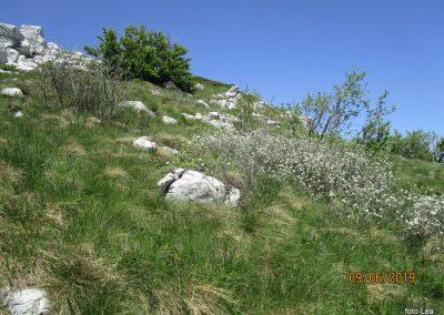 055 VELEBIT, vzpon na Konjevaćo 1381m, 11.44