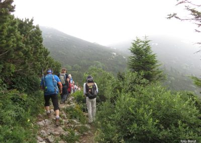 026 VZPON NA SNEŽNIK, na poti od Sviščakov proti SVelikemu Snežniku - med ruševjem in cvetjem, 10.50