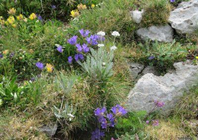 045 VZPON NA SNEŽNIK, botanični vrt na vrhu , 11.40